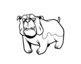 Disegno di Cane bulldog inglese da colorare