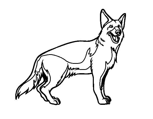 Disegno di cane da pastore tedesco da colorare for Cane disegno facile