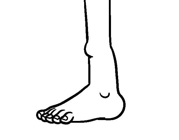 Disegno di Caviglia da Colorare