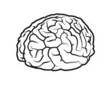 Disegno di Cervello da colorare