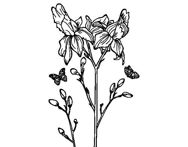 Disegno Di Rosa Con Foglie Da Colorare Acolore Com: Disegno Di Fiore Di Iris Da Colorare