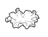 Disegno di Fungo auricularia auricula-judae da colorare