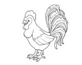 Disegno di Gallo azienda da colorare