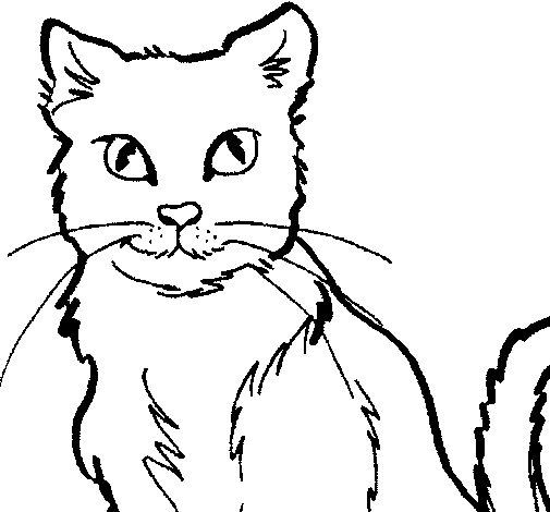 Disegno di gatto da colorare - Gatto disegno modello di gatto ...