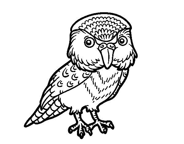 Disegno di Kakapo da Colorare