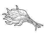 Dibujo de Mazzo di spinaci
