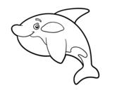 Disegno di Orca giovane da colorare