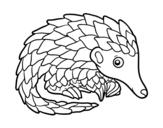 Disegno di Pangolini da colorare