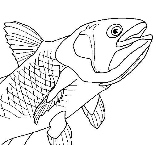 Disegno Di Pesce 6 Da Colorare