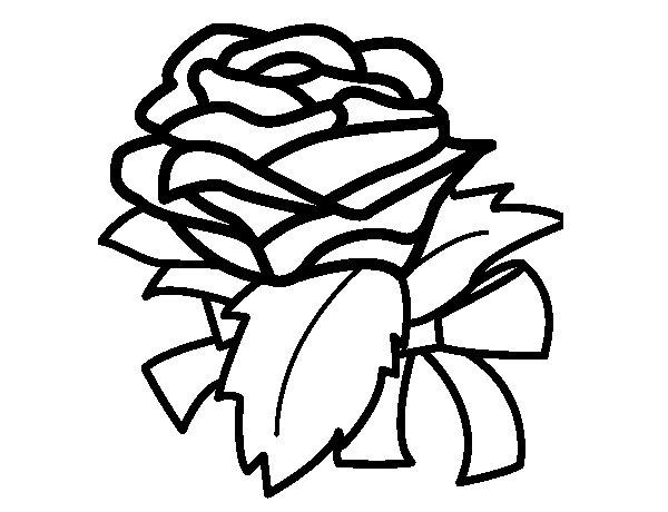 Disegno Di Rosa Con Foglie Da Colorare Acolore Com: Disegno Di Rosa, Botanica Da Colorare