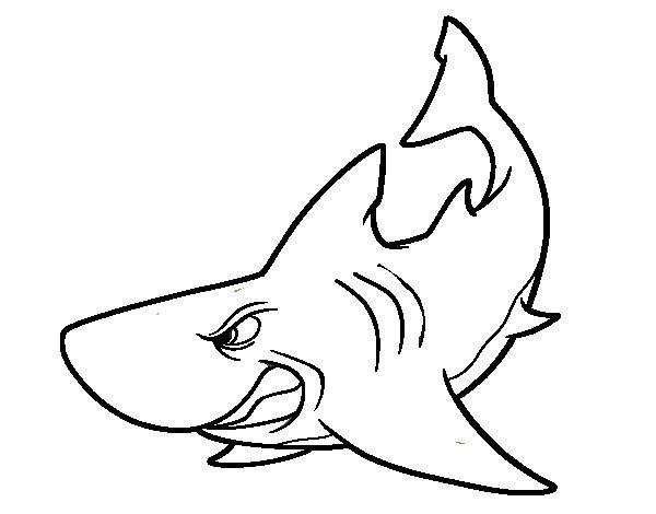 Disegno di squalo furioso da colorare for Squalo da colorare