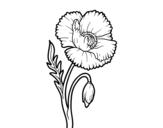 Dibujo de Un fiore di papavero