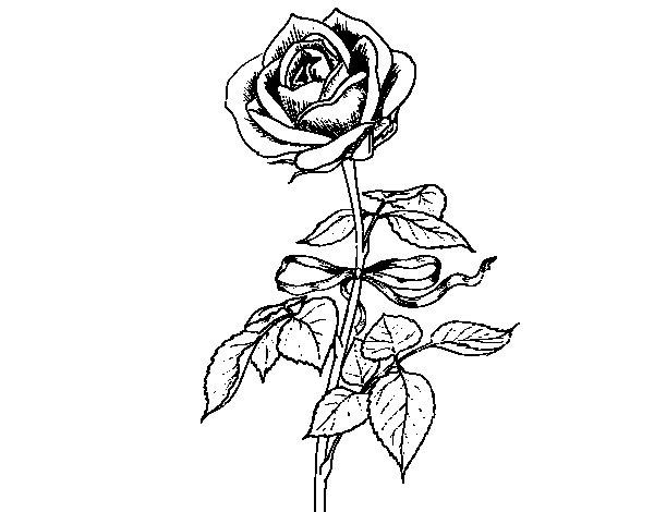 Disegno Di Rosa Con Foglie Da Colorare Acolore Com: Disegno Di Una Rosa Da Colorare