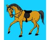 Cavallo da competizione