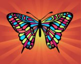 Farfalla grande mormone