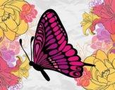 Farfalla sinistra