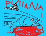 Cyprinus carpio