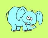 Elefante timido