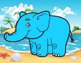 Un piccolo elefante