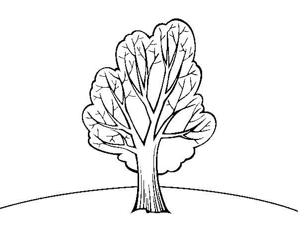 Disegno Di Castagno Da Colorare Acolore Com