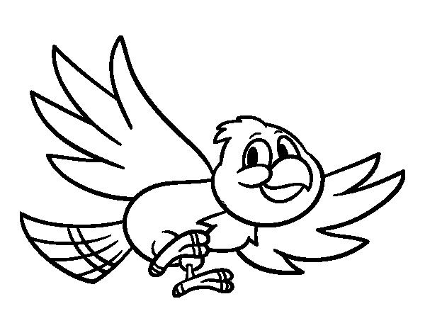 Disegno Di Uccello Che Vola Da Colorare Acolore Com